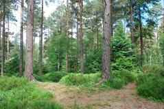 Woodland Landscape Stock Photos
