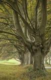Woodland lane in Autumn. Dorset, UK royalty free stock image