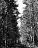 Woodland lane in rural area. Woodland lane on Maryland`s Eastern Shore in monochrome royalty free stock images