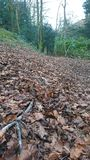 Woodland leafy floor path Royalty Free Stock Photography