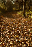 Woodland leaves Royalty Free Stock Photography