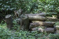 Woodland log pile Royalty Free Stock Photography