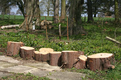 Woodland logging. Firewood and logging in a woodland setting Stock Photography
