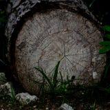 Woodland stock image