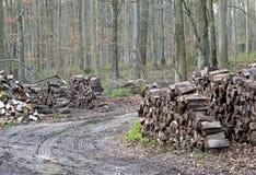 Woodland Management Stock Images