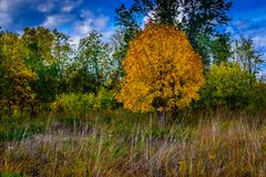 Woodland meadow autumn change abstract background. royalty free stock photo
