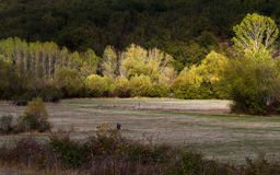 Woodland Meadows with illuminated by a ray of sunshine in autumn Royalty Free Stock Image