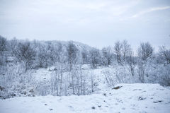 Woodland mountain and park in the winter. The rise of the snow-covered hill covered with forest Stock Photography