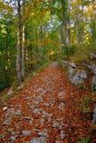 Woodland, Nature, Autumn, Path royalty free stock photos
