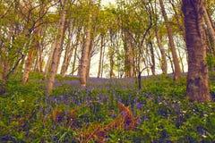 Woodland, Nature, Ecosystem, Flora royalty free stock image