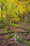 Woodland, Nature, Ecosystem, Leaf royalty free stock image