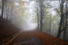 Woodland, Nature, Forest, Fog Stock Photography