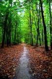 Woodland, Nature, Forest, Leaf stock photos