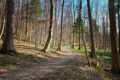 Woodland, Nature, Path, Forest Stock Images