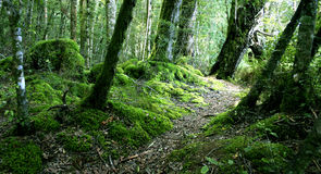 Woodland New Zealand Stock Photo
