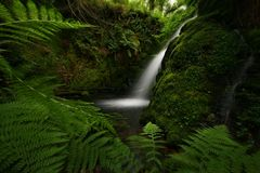Woodland Oasis at Venford on Royalty Free Stock Images