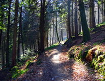 Woodland path. A path through woodland, with hazy sunlight royalty free stock images