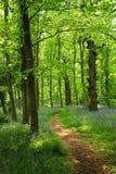 Woodland Path Stock Photos