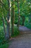Woodland path Royalty Free Stock Photography