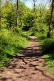 Woodland Path Royalty Free Stock Images