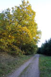 Woodland path in autumn colors Stock Image