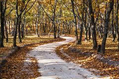 Woodland path in the autumn woodland. Royalty Free Stock Photo