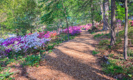 Woodland Path Through Azaleas Washington DC Stock Photos