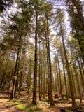 Woodland path Stock Images
