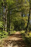 Woodland path with beech trees in autumn Royalty Free Stock Images
