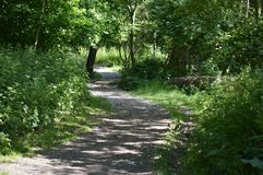 A woodland path in the UK Royalty Free Stock Photos
