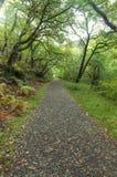 Woodland path, British Autumn Fall. Royalty Free Stock Photos