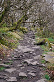 Woodland Path in Derbyshire Stock Images
