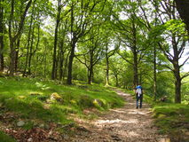 Woodland path Eskdale, Lake District Stock Photos