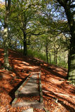 Woodland Path. Stock Photos