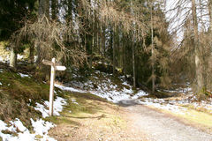 Woodland Path. Stock Photo