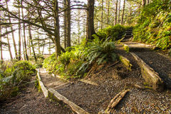 Which Way. Woodland path with a fork symbolic of choosing a path for the future Stock Image