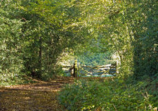 Woodland Path and Gate Royalty Free Stock Photo