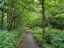 A woodland path in the great British Countryside. Flanked by luscious green treea royalty free stock photos