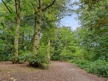 A woodland path in the great British Countryside. Flanked by luscious green treea royalty free stock image