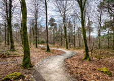 Woodland Path Royalty Free Stock Photography