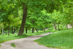 Woodland path meanering into the distance. Stock Photography