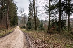 Woodland path in the middle of the forest. Woodland path in the middle of the winter forest Stock Photos