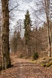 Woodland path in the middle of the forest. Woodland path in the middle of the green forest Stock Photos