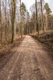 Woodland path in the middle of the forest. Woodland path in the middle of the green forest Royalty Free Stock Photography