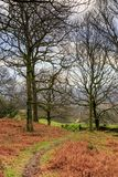 Woodland Path. A pathway through woodland in the Lake District, Cumbria, taken in winter Royalty Free Stock Image
