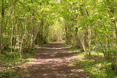 Woodland path in spring Lower Wood, Ingleston Common in Gloucestershire royalty free stock image