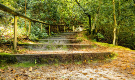Woodland path and steps Royalty Free Stock Photo