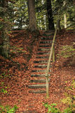 Woodland Path Steps Stock Images
