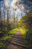 Woodland path on a sunny day in autumn Stock Image