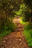 Woodland path. teror Royalty Free Stock Images